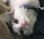 猫5バナー